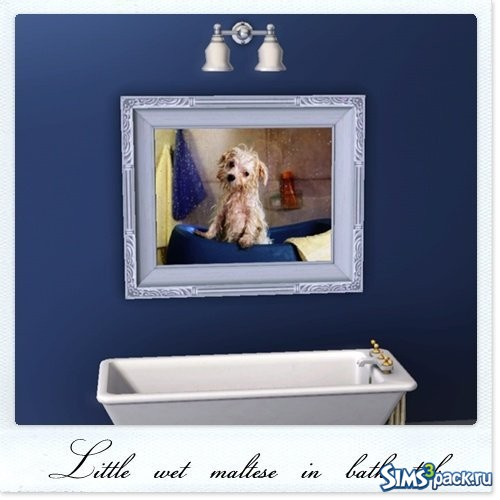 Картина Little wet maltese in bath tub
